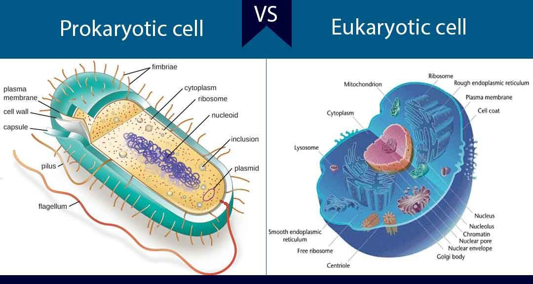 Featured image for differences between prokaryotic and eukaryotic cells